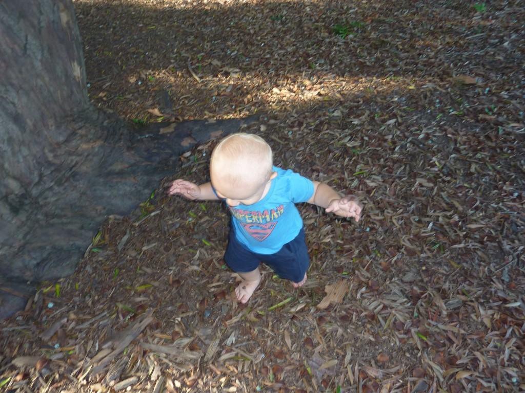 Xander playing at the base of the chosen tree