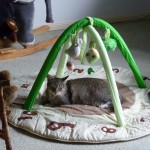 Grum rests on Xander's Totoro infant play mat