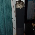 Sleeping on a speaker tower